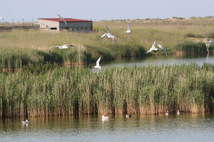 Rye-Harbour-Nature-Reserve-1024x683